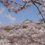 津山城鶴山公園の桜2017の開花情報と見ごろは?駐車場とアクセスまとめ