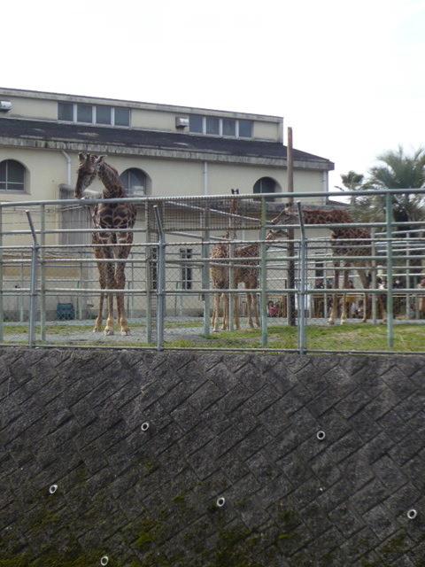 熊本市動物園02