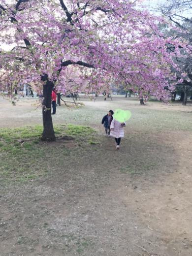 代々木公園海老蔵散歩