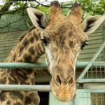 熊本動物園のキリンが見える散歩道はどこ?ドキュメント72時間