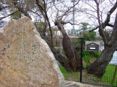 桧原桜公園ポスト