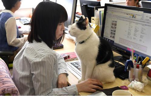 猫オフィス04
