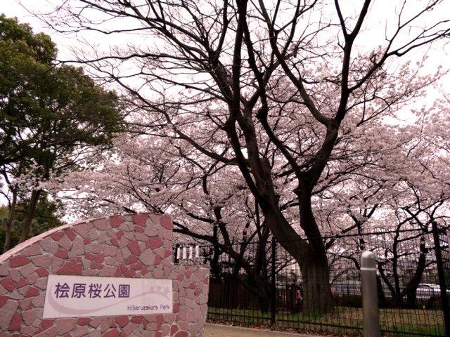 桧原桜公園(福岡市南区)