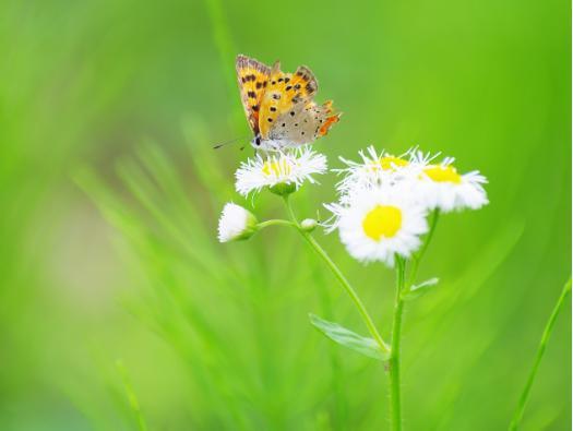 転身 ー蝶よりバラへの全文とチャールズ・E・コックス博士について