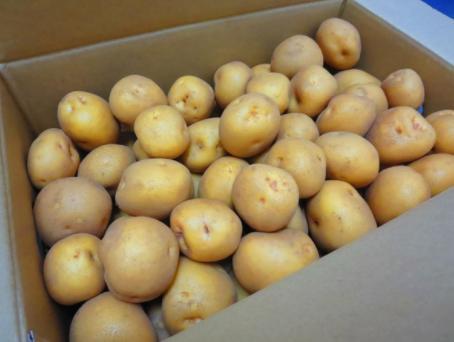 三島の馬鈴薯