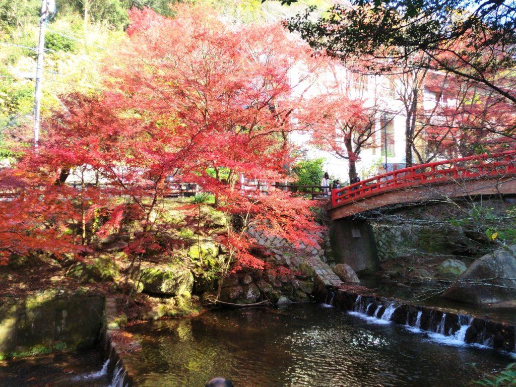 岩屋堂公園 紅葉2
