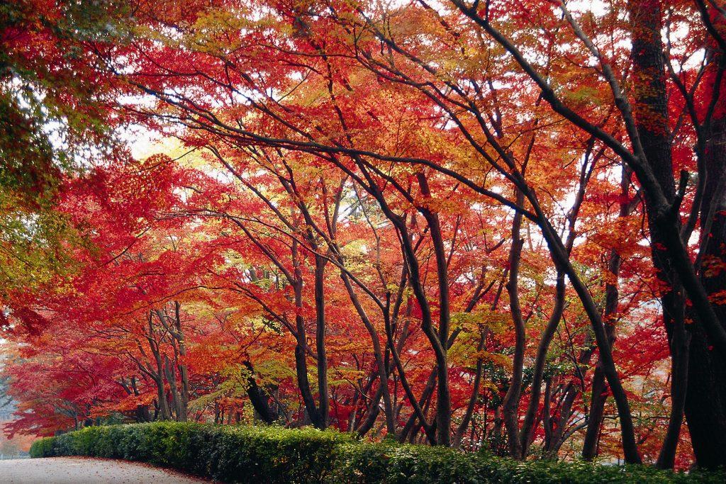 東公園 紅葉