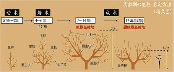低樹高栽培
