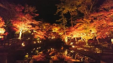 岩屋堂公園 ライトアップ2