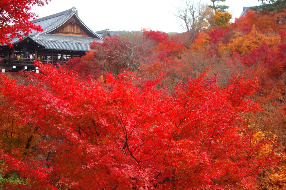 東福寺 紅葉