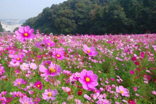 久里浜花の国