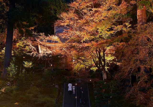 萬徳寺 ライトアップ