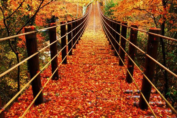 花貫渓谷紅葉