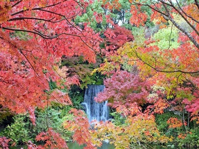 万博記念公園_紅葉の滝