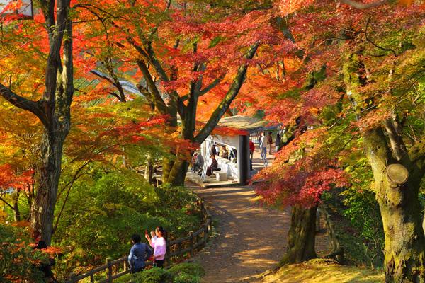 西山公園 紅葉