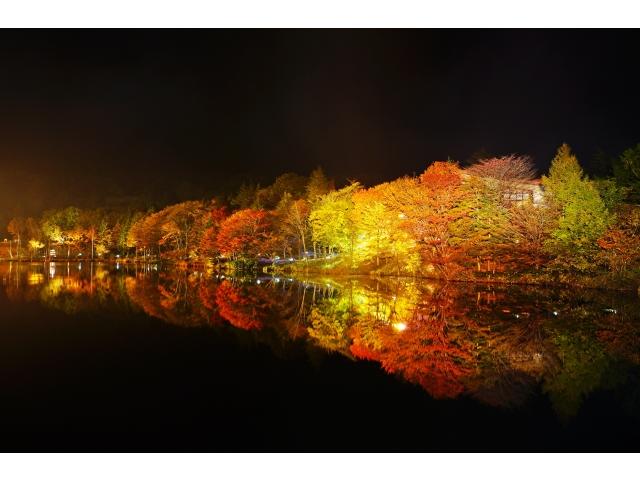 茶臼山高原 ライトアップ