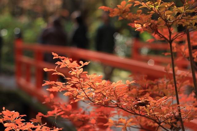鳳来寺山の紅葉2018の見頃は?もみじ祭りのイベントと口コミも調査