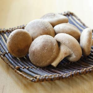 兵庫県の丸しいたけ(満点レストラン)のお取り寄せ通販サイトと買えるお店は?