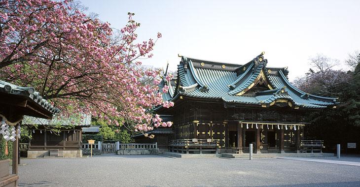三嶋大社 桜1