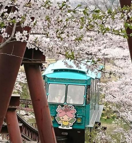 船岡城址公園の桜2019の見頃は?しばた桜まつりとライトアップも調査