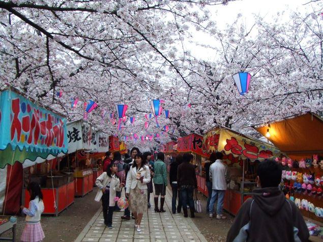 1桜トンネル