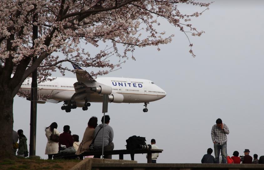 成田さくらの山公園2019桜まつりとライトアップは?トイレや開花状況も調査
