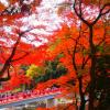 香嵐渓紅葉まつり2018見頃とライトアップは?見どころや混雑も調査